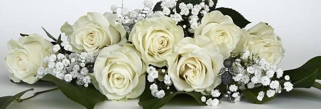 Roses Rose Flower Flowers · Free photo on Pixabay (61267)