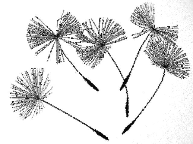 Dandelion Seeds Flower · Free image on Pixabay (62165)