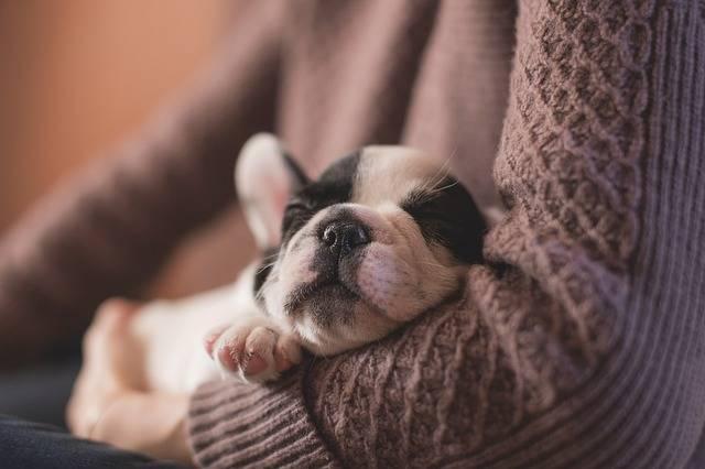 Adorable Animal Canine · Free photo on Pixabay (65221)
