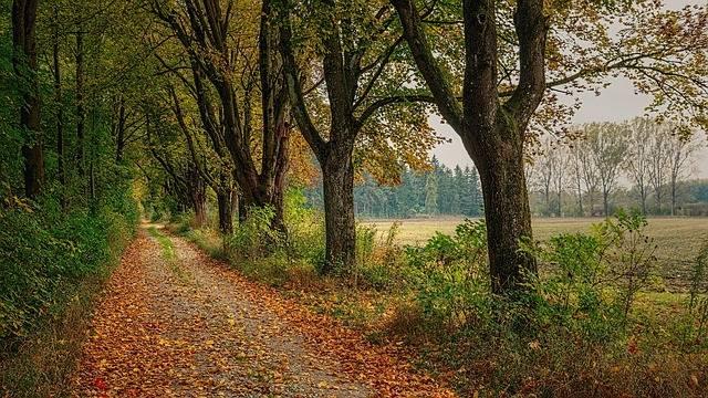 Away Avenue Trees · Free photo on Pixabay (66831)