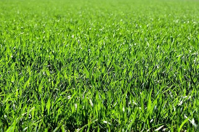 Meadow Field Green · Free photo on Pixabay (68820)