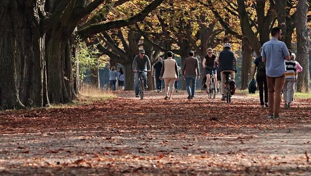 Walk Tree Lined Avenue Nature · Free photo on Pixabay (70315)