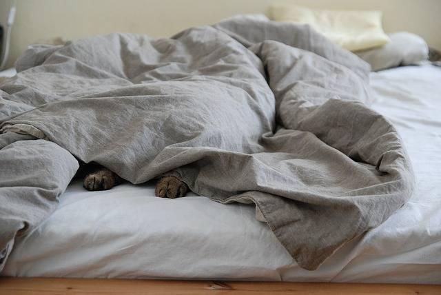 Sunday Bed Lazing Around · Free photo on Pixabay (72499)
