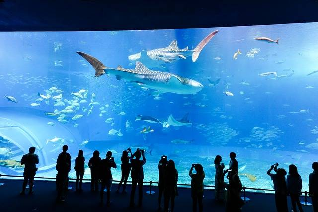 Aquarium Fish Underwater · Free photo on Pixabay (76636)