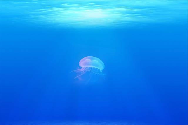 Jellyfish Under Water Sea - Free photo on Pixabay (89218)