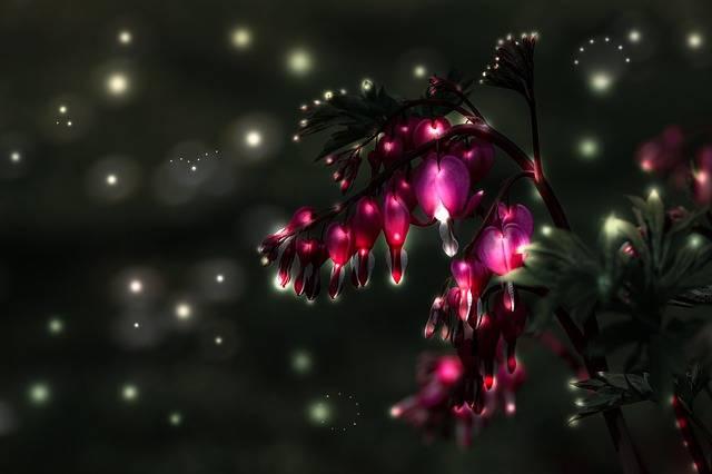 Bleeding Heart Flower Blossom - Free photo on Pixabay (93762)