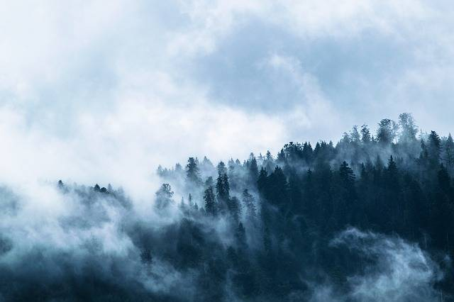 Fog Forest Dark - Free photo on Pixabay (97096)