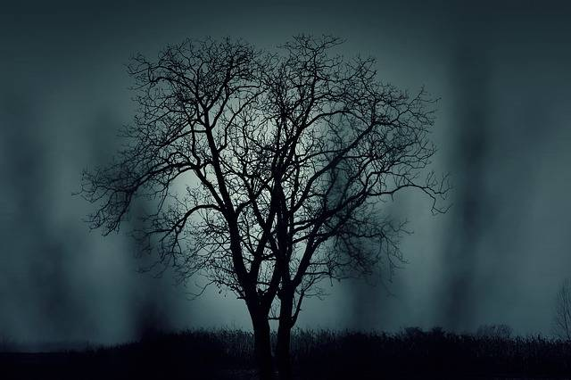 Tree Silhouette Mysterious - Free photo on Pixabay (97111)