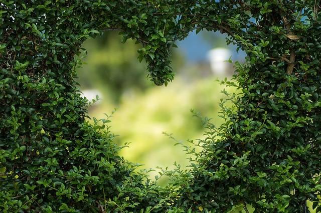 Heart Herzchen Love - Free photo on Pixabay (99686)