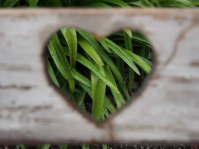 Love Heart Valentine - Free photo on Pixabay (99694)