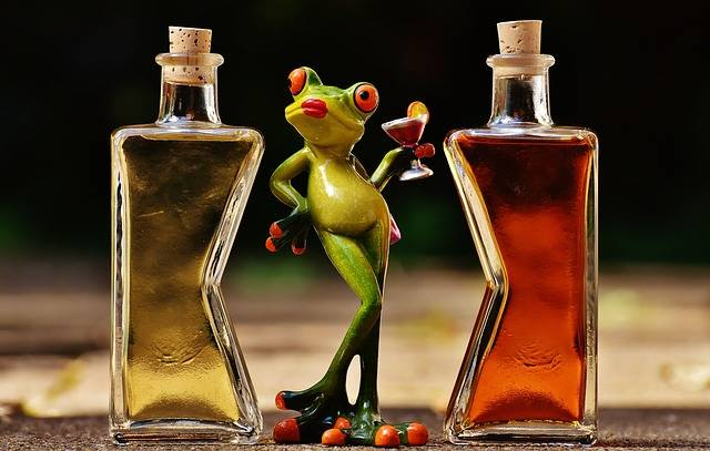 Frogs Chick Beverages - Free photo on Pixabay (103132)
