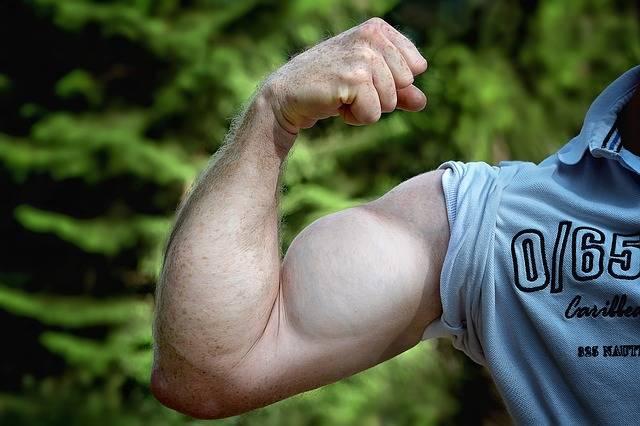 Muscles Arm Be Mus Kelt Man - Free photo on Pixabay (111894)