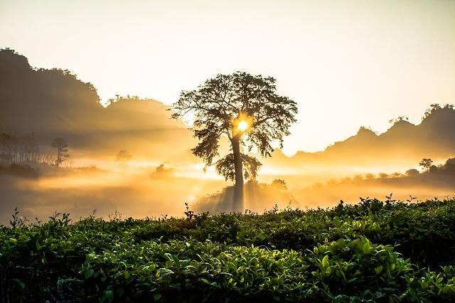 Dawn Tree Bright - Free photo on Pixabay (112911)