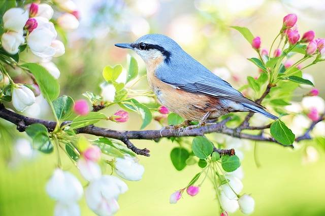 Spring Bird - Free photo on Pixabay (113735)
