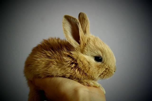 Rabbit Palm Hand - Free photo on Pixabay (117329)