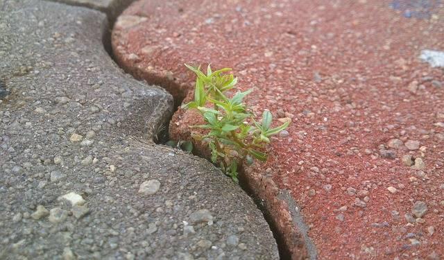 Life Determination Bricks - Free photo on Pixabay (119224)