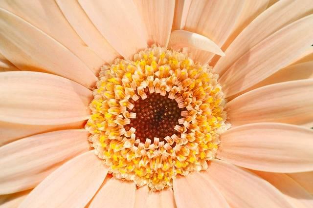 Pale Peach Pastel - Free photo on Pixabay (119636)