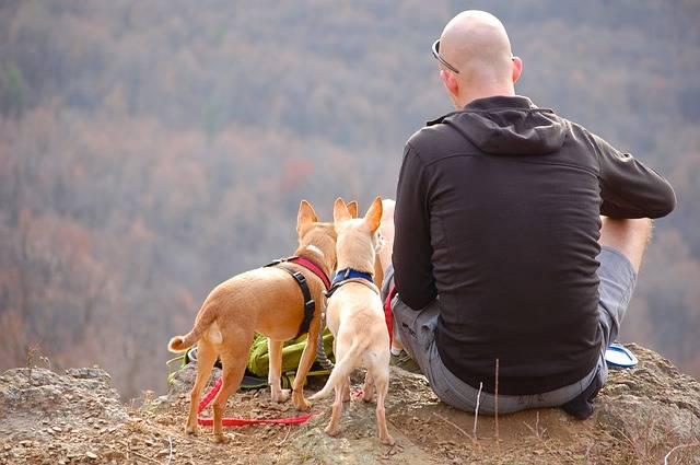 Man Dogs Hiking - Free photo on Pixabay (120856)