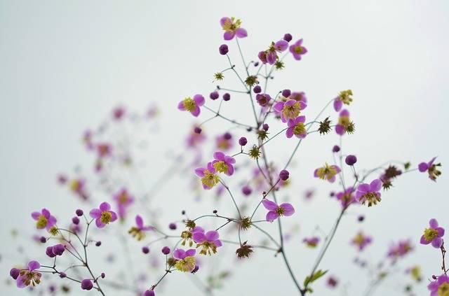 Flower Floral Blossom - Free photo on Pixabay (122096)