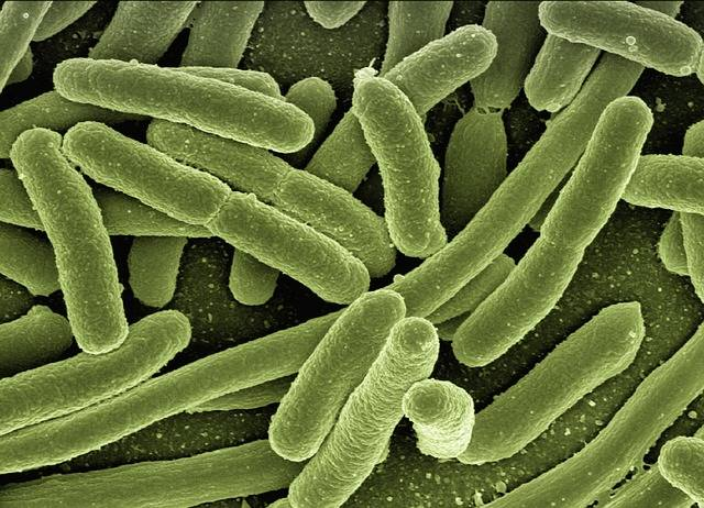 Koli Bacteria Escherichia Coli - Free photo on Pixabay (127790)