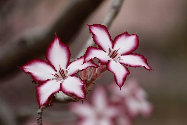 Flower Impala Lily Floral - Free photo on Pixabay (128320)