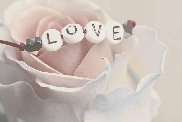 Love Rose Flower - Free photo on Pixabay (133664)