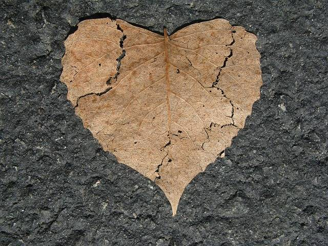 Heart Broken Nature Love - Free photo on Pixabay (134622)
