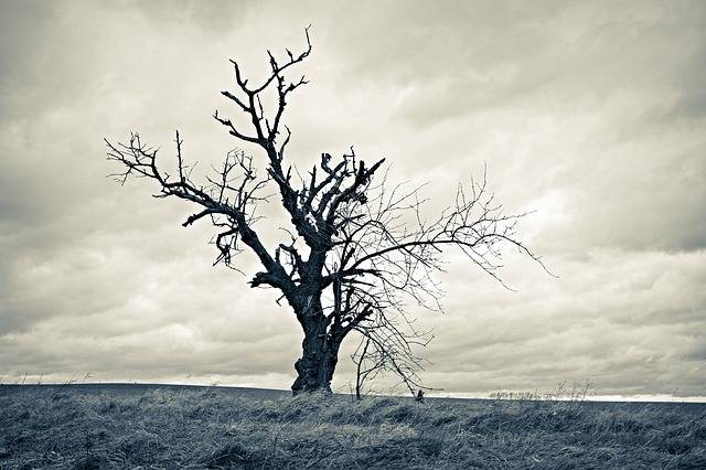 Tree Dried Lonely - Free photo on Pixabay (136988)