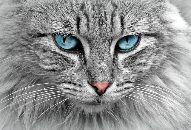Cat Animal Portrait - Free photo on Pixabay (146388)