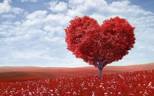 Heart-Shape Tree Red - Free photo on Pixabay (150213)