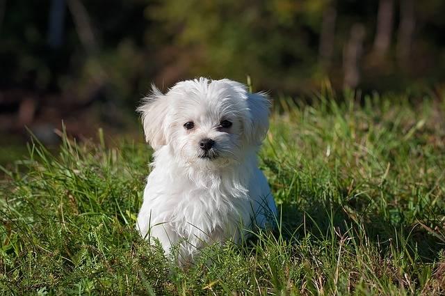 Dog Young Small - Free photo on Pixabay (152123)
