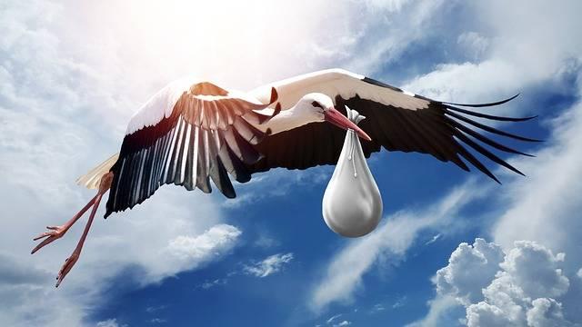 Bird Nature Wing - Free photo on Pixabay (152575)