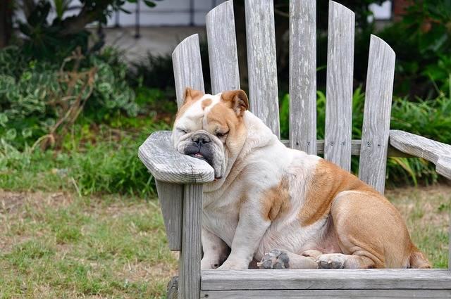Dog Sleeping Resting - Free photo on Pixabay (153727)