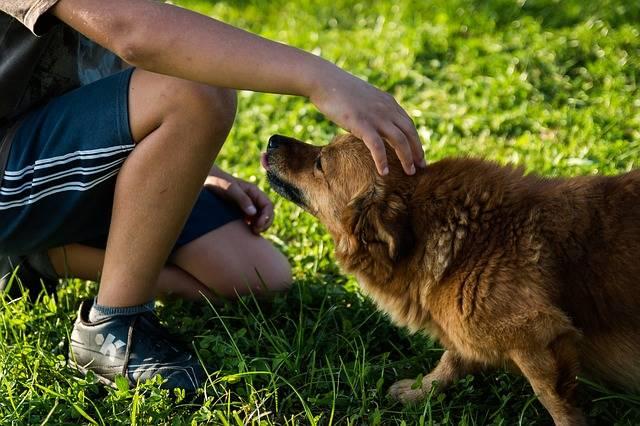 Dog Man A Friend Of - Free photo on Pixabay (155334)