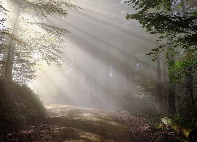 Morning Fog Sunbeam - Free photo on Pixabay (158430)