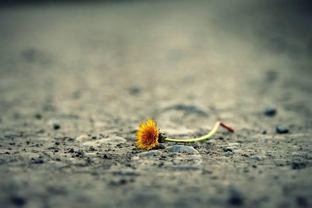 Flower Road Dandelion - Free photo on Pixabay (158494)