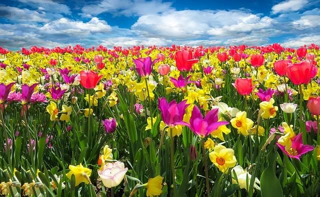 Spring Awakening - Free photo on Pixabay (158541)