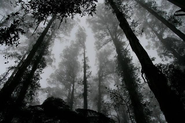 Forest Foggy Misty - Free photo on Pixabay (159048)