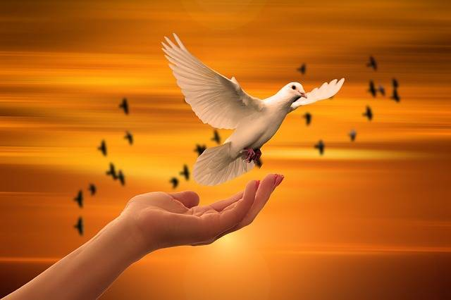 Dove Hand Trust - Free photo on Pixabay (161365)