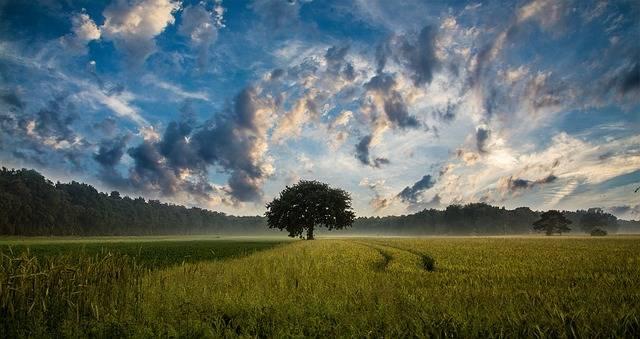 Tree Field Cornfield - Free photo on Pixabay (163151)