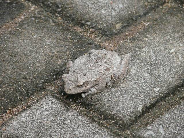 Toad Camouflage Hide - Free photo on Pixabay (166205)