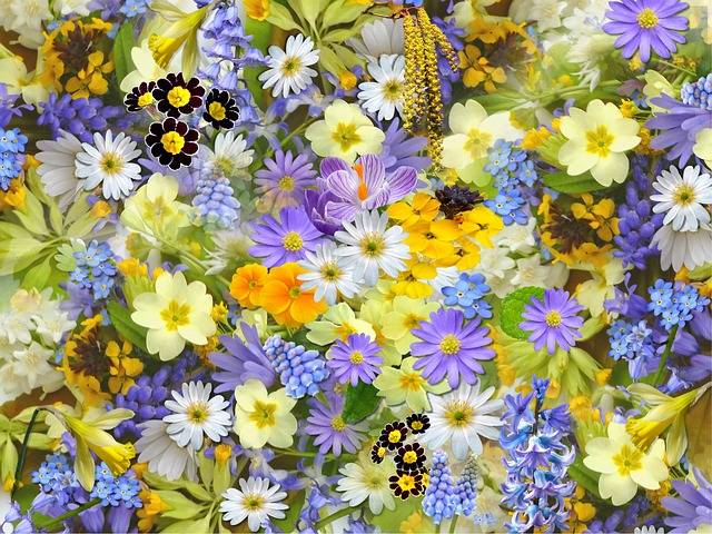 Spring Flowers Collage - Free photo on Pixabay (167960)