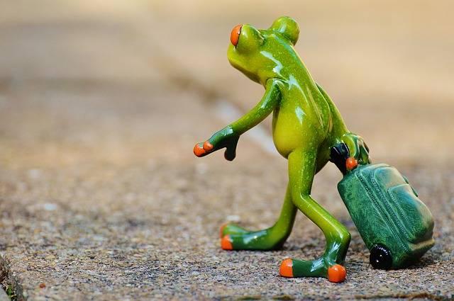 Frog Farewell Travel - Free photo on Pixabay (168367)