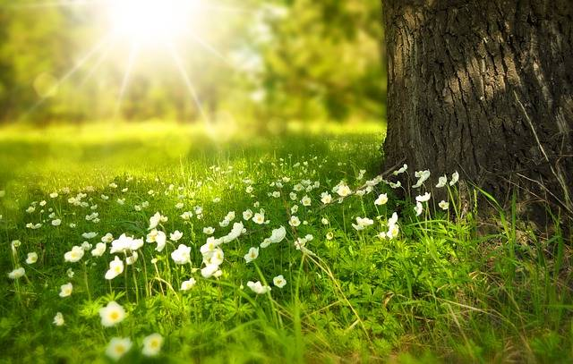 Spring Tree Flowers - Free photo on Pixabay (168489)