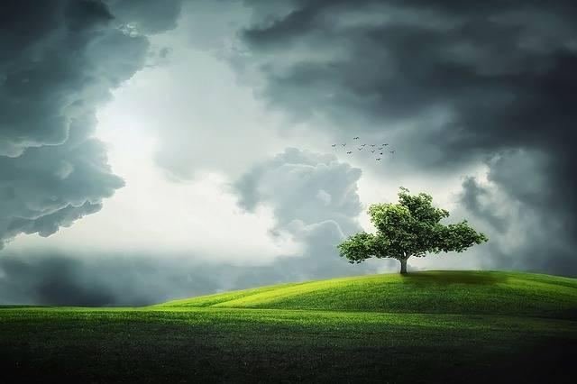 Tree Summer Beautiful - Free photo on Pixabay (169225)