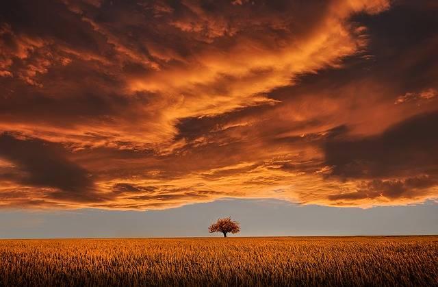 Tree Field Calm Tranquil - Free photo on Pixabay (169230)