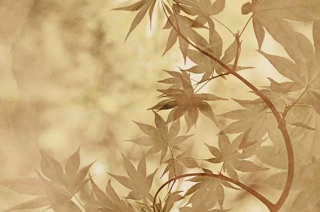 Bamboo Plant Green - Free photo on Pixabay (169545)