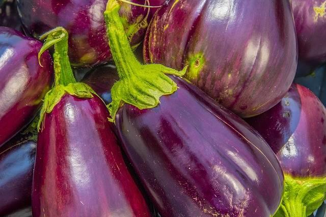 Eggplant Aubergine Solanum - Free photo on Pixabay (170420)