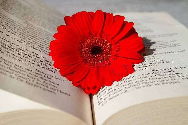 Book Open Read - Free photo on Pixabay (171999)