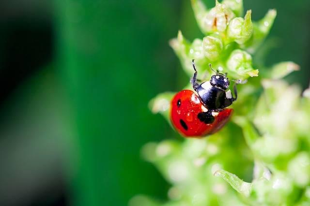 Ladybug Spring Grass - Free photo on Pixabay (172214)